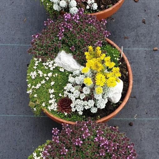 Arrangements Garden Plants (Leeuw-den Engelsen)