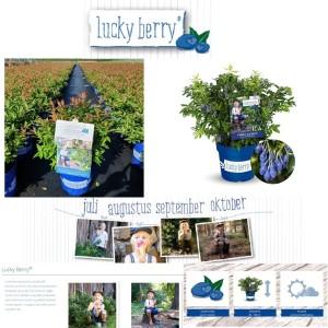 Vaccinium corymbosum 'Lucky Berry' (Son & Koot BV)