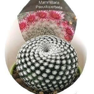 Mammillaria pseudoperbella