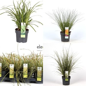 FA Carex SELECTION #140