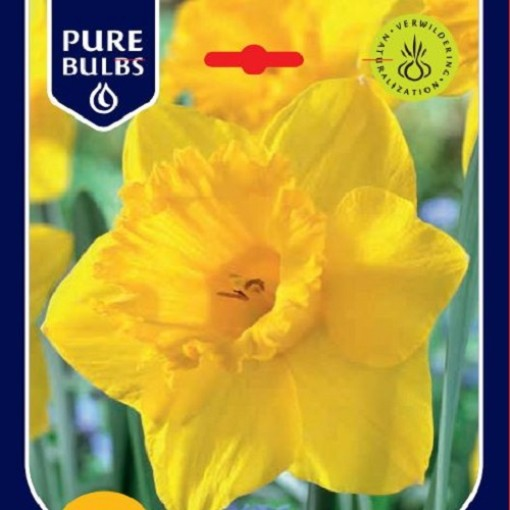Narcissus 'Mando' (Bosrand, Kwekerij de)