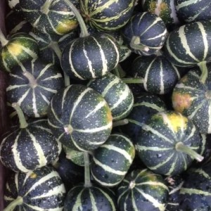 Cucurbita pepo 'Flat Striped'