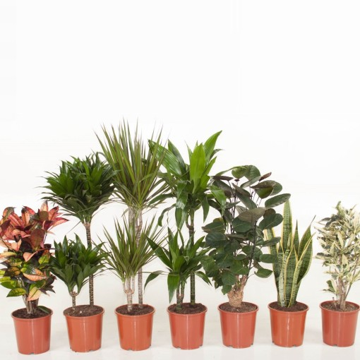 Houseplants MIX (Ammerlaan, The Green Innovater)