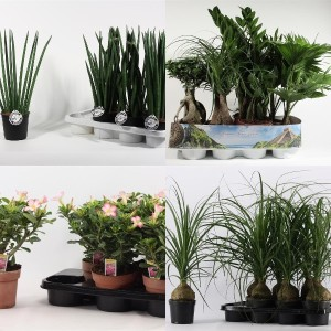 FA Houseplants SELECTION #130