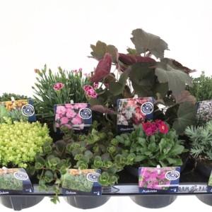 Perennials MIX (Kwekerij de Noordpoel)