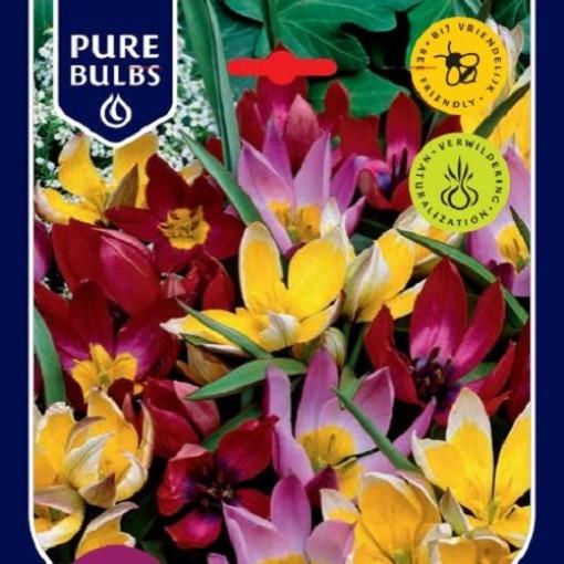 Tulipa BOTANICAL MIX (Bosrand, Kwekerij de)