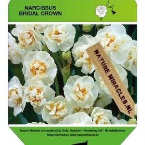 Narcissus 'Bridal Crown' (Gebr. Straathof)