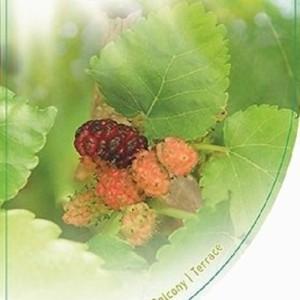 Morus nigra (Dool Botanic)