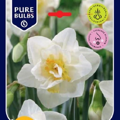 Narcissus 'White Lion' (Bosrand, Kwekerij de)