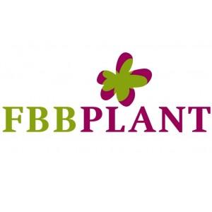 FBB Plant