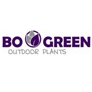 BOGREEN Outdoor Plants
