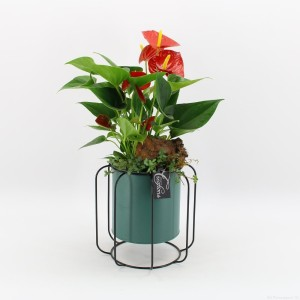 Arrangements Anthurium