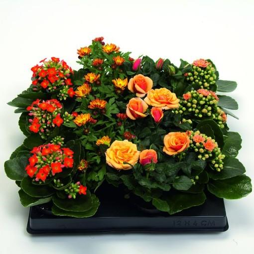 Houseplants MIX ORANGE (Gasa DK)