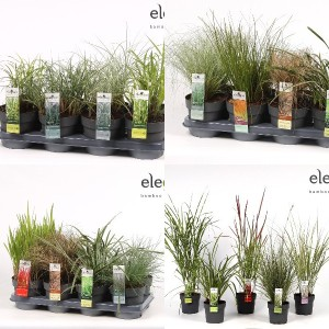 FA Grasses SELECTION #182