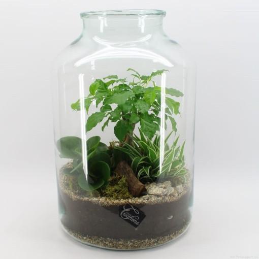 Arrangements Houseplants (Mixt Creations BV)