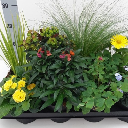 Perennials MIX (RuBa Baers)