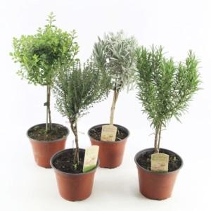 Herbs MIX