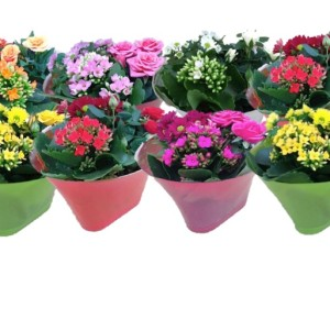 Flowering plants MIX