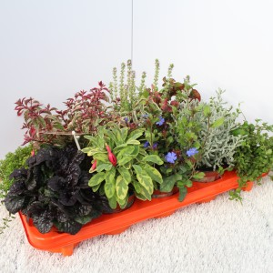 Perennials MIX (Experts in Green)