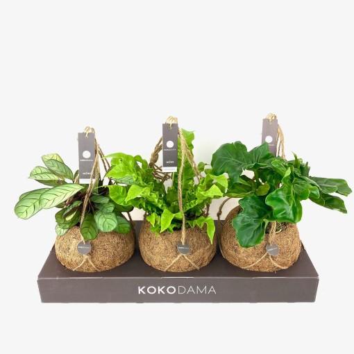 Houseplants MIX (Kokodama)