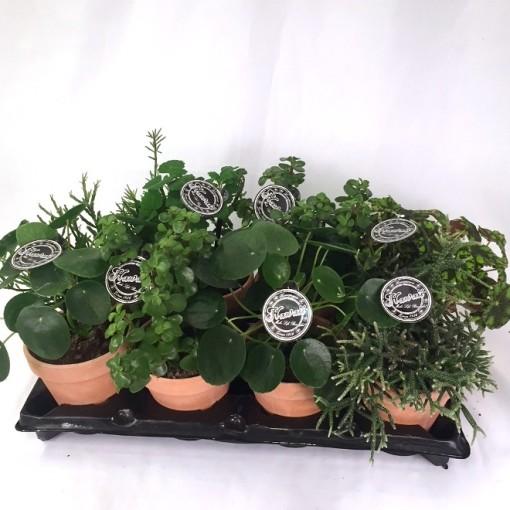 Houseplants MIX (Gasa DK)