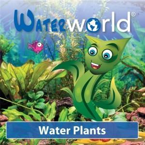Aquatic plants MIX (van der Velde Waterplanten BV)
