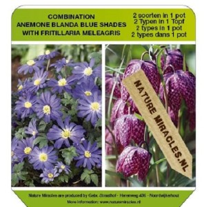 Bulbous plants MIX (Gebr. Straathof)