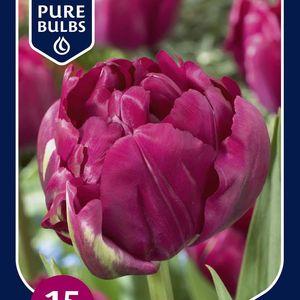 Tulipa 'Royal Acres'