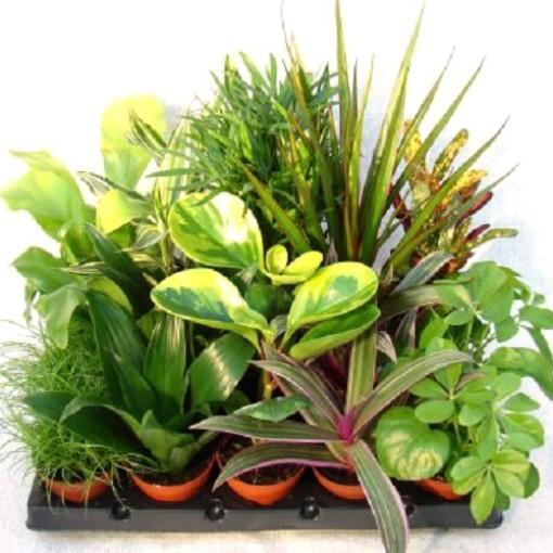 Foliage plants MIX (Gasa DK)