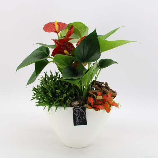 Arrangements Anthurium (Mixt Creations BV)