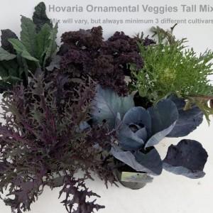 Brassica oleracea MIX (Hofstede Hovaria)