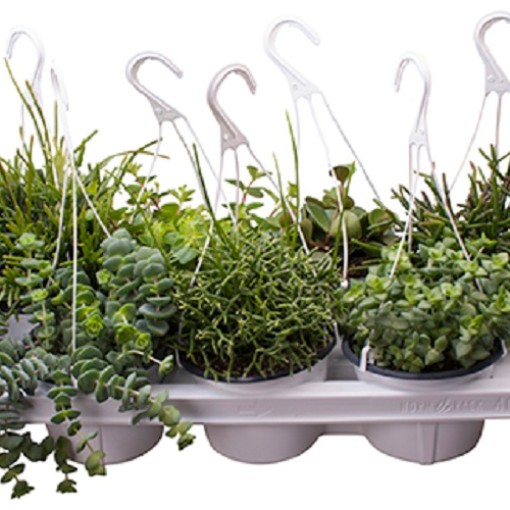 Hanging plants MIX (Gasa DK)