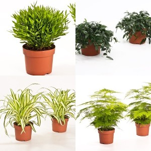FA Houseplants SELECTION #176