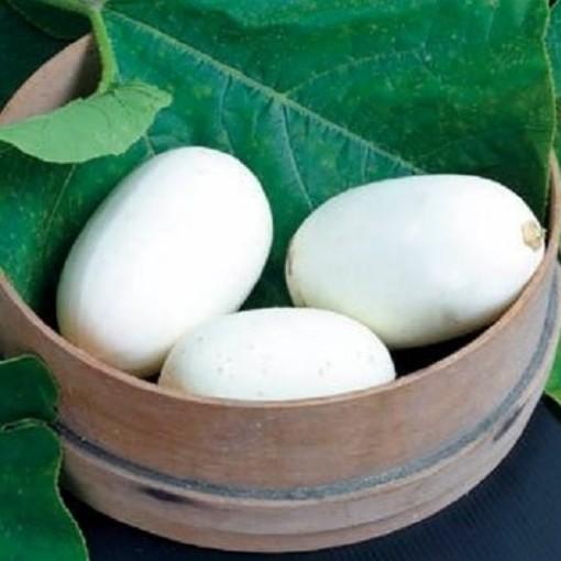Cucurbita pepo 'Nest Egg' (4AllGreen)