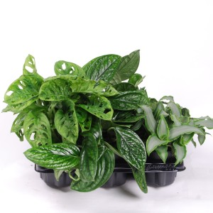 Houseplants MIX (Van der Arend Tropical Plantcenter)