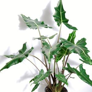 Alocasia 'Sarian' (Van der Arend Tropical Plantcenter)