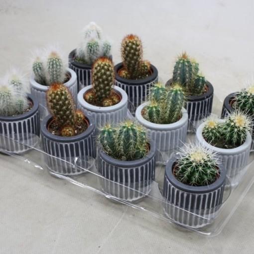 Cacti MIX (Ubink)