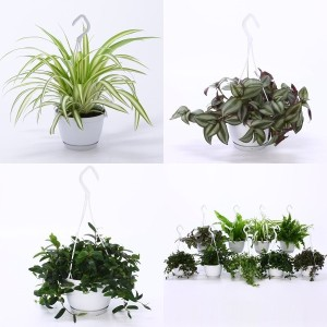 FA Hanging Plants SELECTION #183
