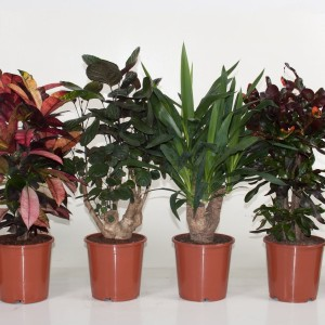 Houseplants MIX (Ammerlaan Green Innovater)