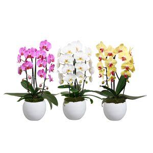 Phalaenopsis ELEGANT CASCADE
