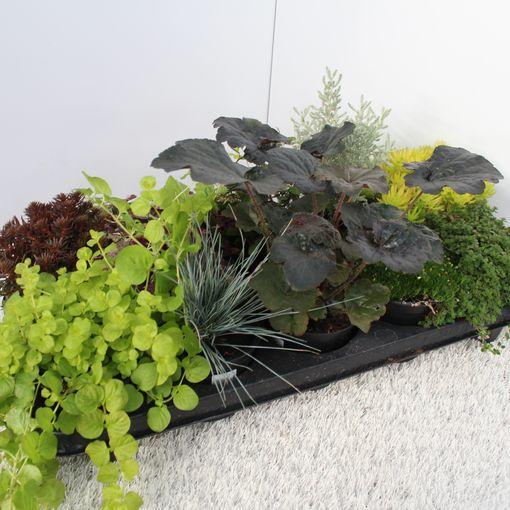 Perennials MIX (Experts in Green)