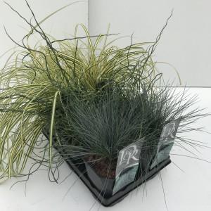 Grasses  MIX
