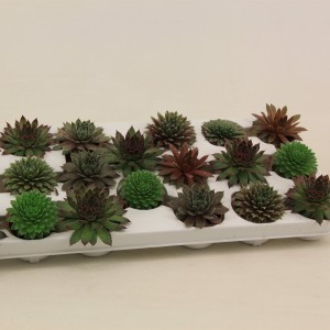 Sempervivum MIX (Van der Valk bv)