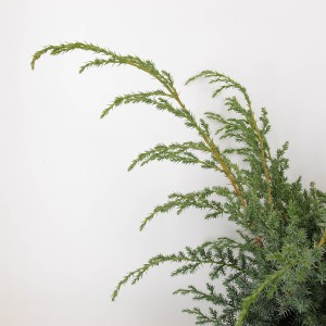 Juniperus chinensis 'Blue Alps' (Bremmer Boomkwekerijen)
