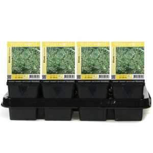 Alisma parviflorum (van der Velde Waterplanten BV)