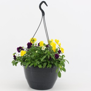Viola COOL WAVE MIX IN POT (Kwekerij Baas)