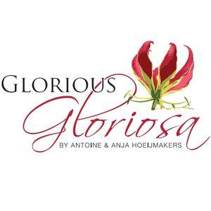 Glorious Gloriosa