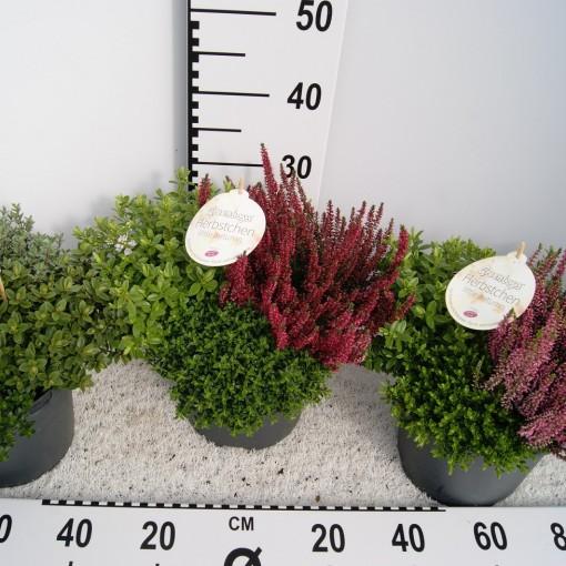 Arrangements Autumn (Experts in Green)
