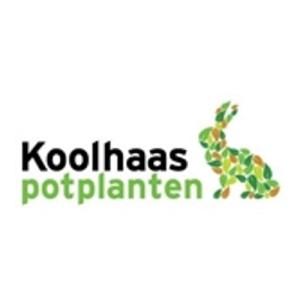 Koolhaas Potplanten