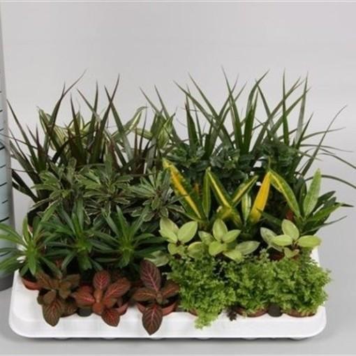 Houseplants MIX (Hkw. van der Velden)